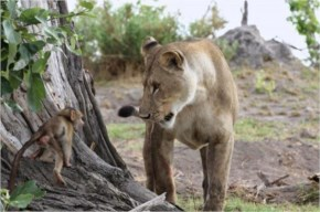 The baby baboon was unharmed, It was a miracle! But what happened next was even more unbelievable…