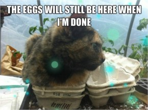 The eggs will still be here when I