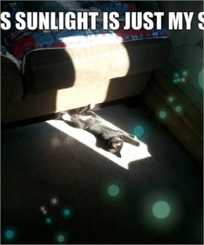 This sunlight is just my size.