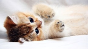 1. Cute Kitten Playing with fun