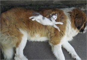 1 of 10 Pictures of Cute Cats Used Dog As Beds