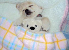 10 Cute and Adorable Puppies Hug With Their Stuffed Animals During Nap Time #1