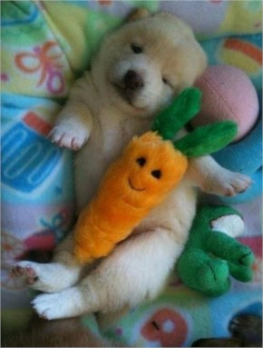 10 Cute and Adorable Puppies Hug With Their Stuffed Animals During Nap Time #2
