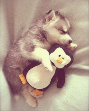 10 Cute and Adorable Puppies Hug With Their Stuffed Animals During Nap Time #3