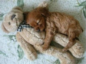 10 Cute and Adorable Puppies Hug With Their Stuffed Animals During Nap Time #4