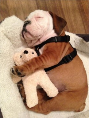 10 Cute and Adorable Puppies Hug With Their Stuffed Animals During Nap Time #5