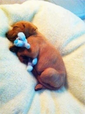 10 Cute and Adorable Puppies Hug With Their Stuffed Animals During Nap Time #6