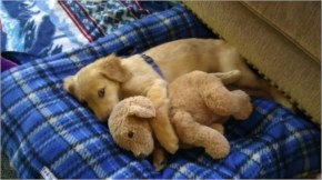 10 Cute and Adorable Puppies Hug With Their Stuffed Animals During Nap Time #7