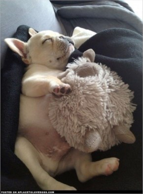 10 Cute and Adorable Puppies Hug With Their Stuffed Animals During Nap Time #8