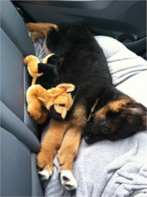 10 Cute and Adorable Puppies Hug With Their Stuffed Animals During Nap Time #9