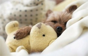 10 Cute and Adorable Puppies Hug With Their Stuffed Animals During Nap Time #10