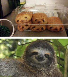 11 My Chocolate Croissants Look Like Little Sloths