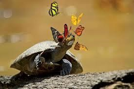 11 out of 12 Butterflies Play with Cute & Rare Animals Pictures - Turtle