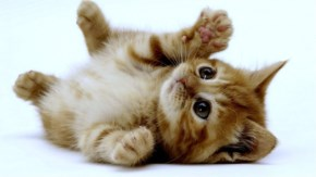 13. Cute Kitten playing in air