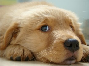 14 Cutest Puppies Which Make Your Day Brighter #6