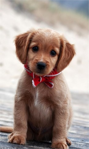14 Cutest Puppies Which Make Your Day Brighter #10