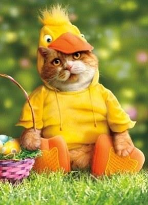 14.  Easter Duck Cat