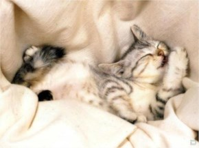 17. Cute Kitten Sleeping Peacefully