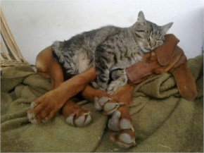 2 of 10 Pictures of Cute Cats Used Dog As Beds