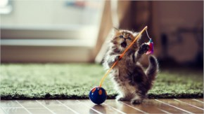 20. Cute Kitten dancing in joy