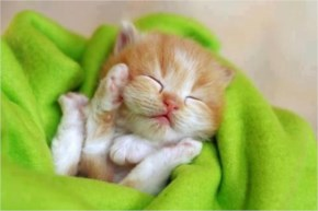 26. Cute Kitten Sleeping