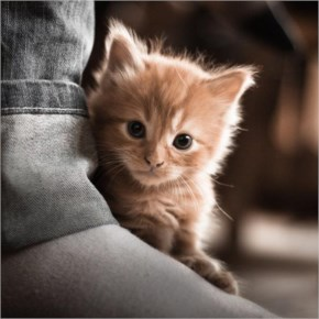 27. Cute Kitten Hiding