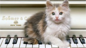 28. Cute kitten playing piano