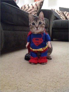 29. Super(Cat)man