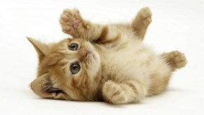 3. Cute Kitten playing