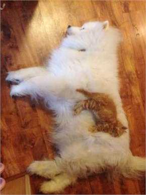 3 of 10 Pictures of Cute Cats Used Dog As Beds