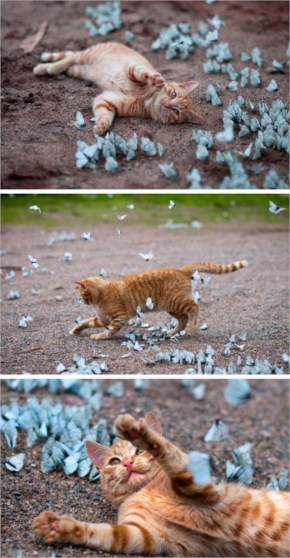 3 out of 12  Butterflies Play with Cute & Rare Animals Pictures - Cat
