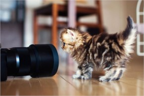 30. Cute Kitten having a photo shoot