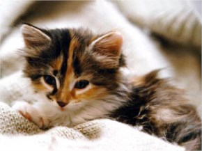 4. Cute kitten sleeping on mat
