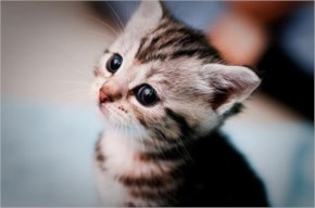 5. Cute kitten wants to have cheese