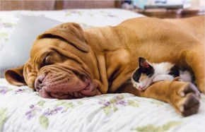 5 of 10 Pictures of Cute Cats Used Dog As Beds