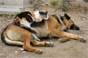 5 out of 10 Pictures of Cute Cats Used Dog As Pillows