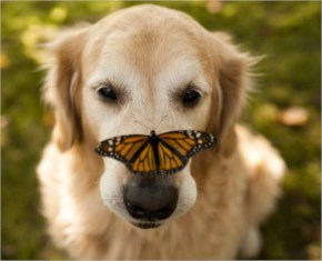 5 out of 12  Butterflies Play with Cute & Rare Animals Pictures - Curiousity dog