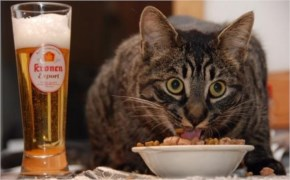 "6. Cat food plus beer ""Best combination"""