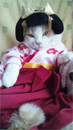 6. Geisha Cat