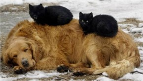 6 of 10 Pictures of Cute Cats Used Dog As Beds