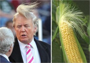 6 Who Wore It Better? Donald Trump Or This Ear Of Corn?