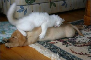7 of 10 Pictures of Cute Cats Used Dog As Beds