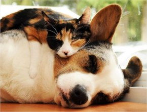 7 out of 10 Pictures of Cute Cats Used Dog As Pillows