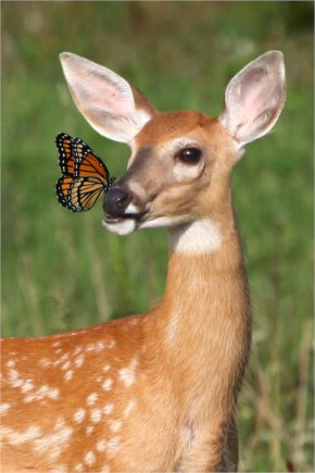 7 out of 12 Butterflies Play with Cute & Rare Animals Pictures - Deer