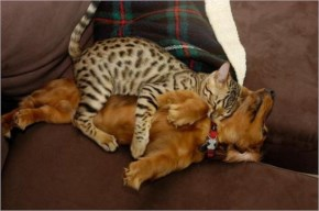 8 of 10 Pictures of Cute Cats Used Dog As Beds