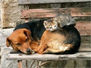 8 out of 10 Pictures of Cute Cats Used Dog As Pillows