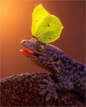 8 out of 12 Butterflies Play with Cute & Rare Animals Pictures - Gecko