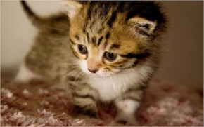 9. Cute kitten taking a walk around the house