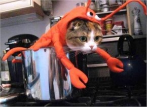 9. Lobster Cat