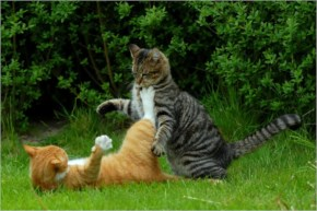 Cats Fighting with their full Rajni's Power as taught by Rajnikanth